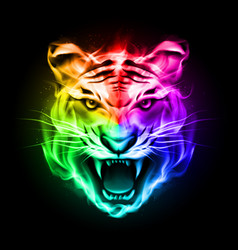 head of tiger blazing in spectrum fire on black vector image