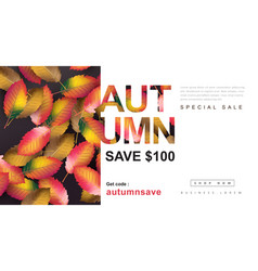 autumn gift coupon banner background vector image