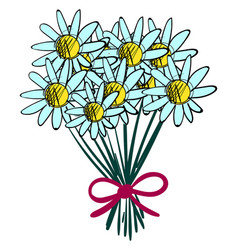 bouquet chamomile on white background vector image