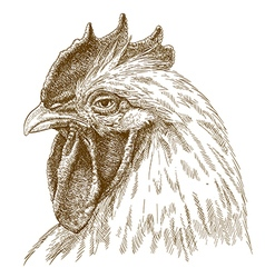 engraving rooster head vector image