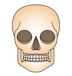 Isolated skull head design vector image