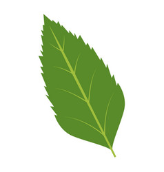 natural leaf botanical foliage ecology element vector image