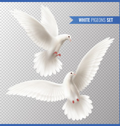 White dove set vector