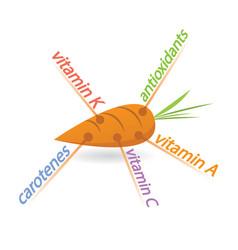 Carrot content properties and benefits vector