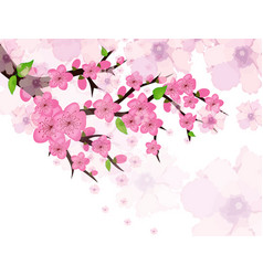 Chinese new year card with plum blossom vector