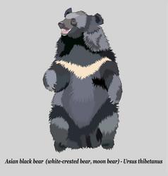 Realistic asian black bear vector