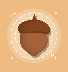 fresh nut carton vector image
