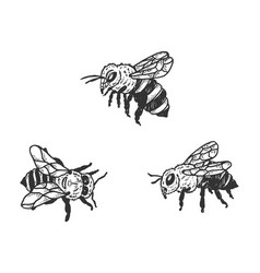 bee insect animal sketch vector image