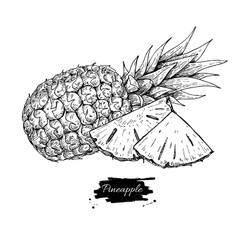 Hand drawn pineapple and sliced pieces vector