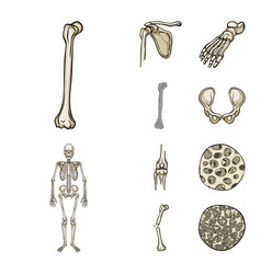 isolated object of bone and skeleton symbol vector image
