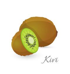Kiwi exotic fruit whole and half kiwifruit vector
