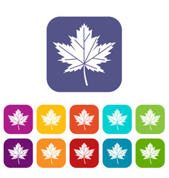 maple leaf icons set vector image