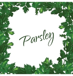 Parsley on a white background green frame of vector