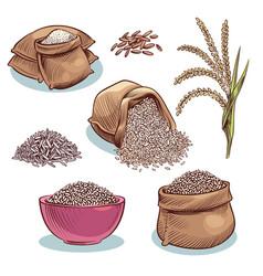 rice sacks bowl with rice grains and ears vector image