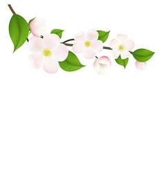Pastel Apple Tree Flowers vector image