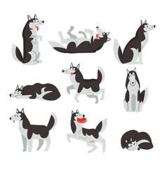 Siberian husky character sett dog in different vector