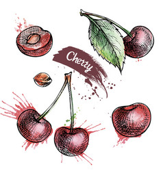 cherry hand drawn set vector image