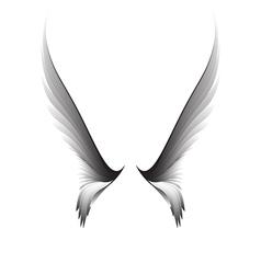Gray pair wings vector