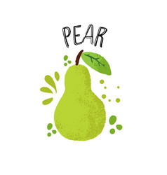hand draw pear green pear vector image