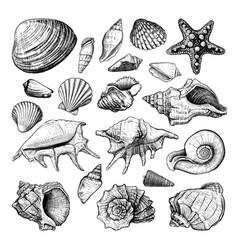 Seashells big set vector