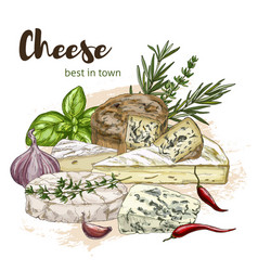 Color realistic sketch of cheese vector