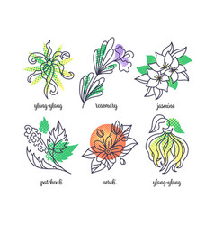 Perfume herbs line and color icons set vector