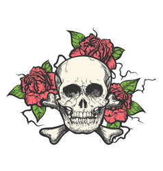 Skull with rose flowers vector