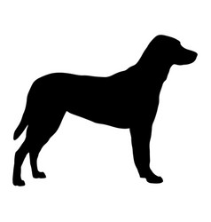 silhouette of a standing dog vector image