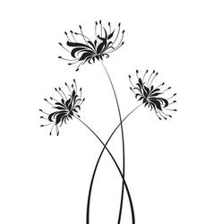 Flower higanbana vector