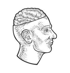 open brain in head sketch vector image
