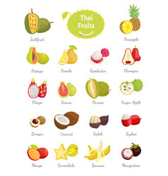 thai fruits set lush food vector image