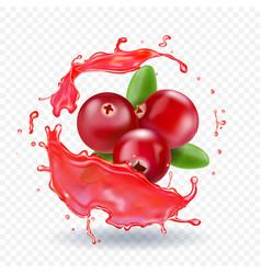 cranberry in juice splash realistic vector image vector image