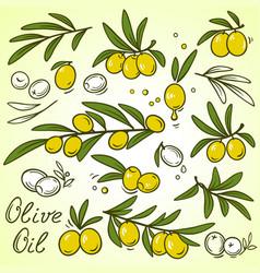 olive brances set vector image