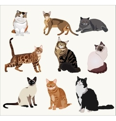 Breed cats in different poses Cartoon vector image