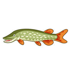 cartoon happy pike vector image