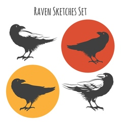 raven or black crow bird ink drawing sketch with vector image