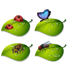 four types insects on green leaves vector image