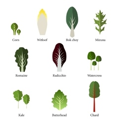 Set of salad bowl Leafy vegetables green salad vector image