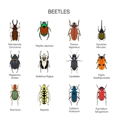 Bugs set in flat style design Different vector image