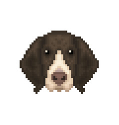 portrait of a french pointing dog in pixel art vector image