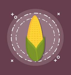 sweet golden corn vector image