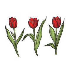 Tulip flowers sketch vector