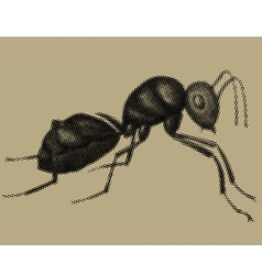 An ant vector