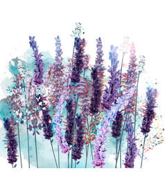 Beautiful spring lavender vector