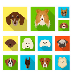Dog breeds flat icons in set collection for design vector