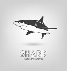 Shark logo vector