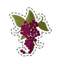 Cartoon bunch grape wine icon vector