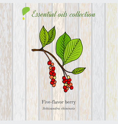 pure essential oil collection five-flavor berry vector image
