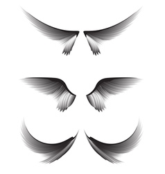 Set gray wings on white background design element vector image