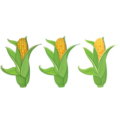 collection corn vector image vector image